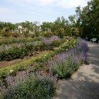 Парк роз на холме Петрин