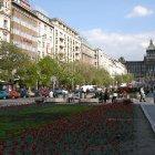 Красные тюльпаны на площади Вацлава