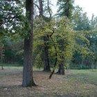 Стромовка получила свое имя благодаря большому количеству деревьев
