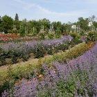 Сад Роз на Петршинском холме